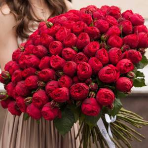 Большой букет 101 красная пионовидная роза R110